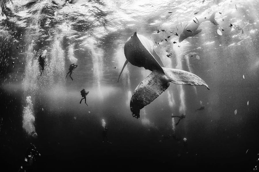 "Primo premio: ""Whale Whisperers"", Categoria: Outdoor scenes, Fotografia di Anuar Patjane, via National Geographic"